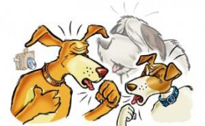 Moet uw hond hoesten? Kennelhoest check!